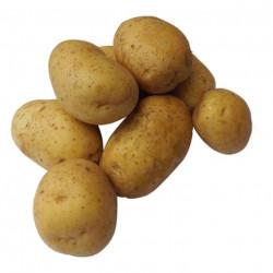 Bio Kartoffeln Corine