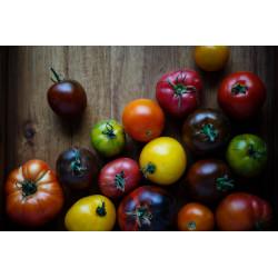 Frische Tomaten (Saison...